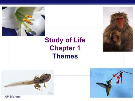 AP Biology 2007-2008 Study of Life Chapter 1 Themes.