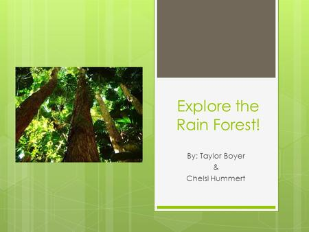 Explore the Rain Forest! By: Taylor Boyer & Chelsi Hummert.