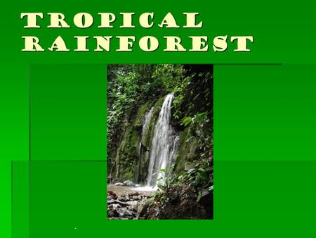 Tropical Rainforest.. EMERGENTS: Giant trees that are much higher than the average canopy height. It houses many birds and insects. CANOPY: The upper.