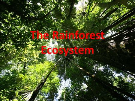 The Rainforest Ecosystem. Learning objectives: Explain how the rainforest ecosystem works including the layers of the rainforest Explain how plants and.