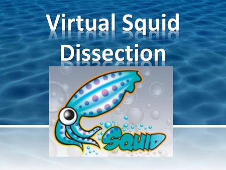 Hello! Welcome to Mr. D's Virtual Dissection Lab. While you may not be able to participate in the lab, I hope you will find this quick exploration into.