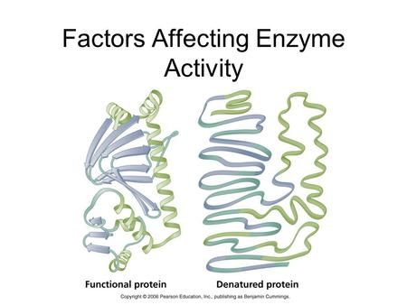 enzyme controlled reaction factors affect chemical structu