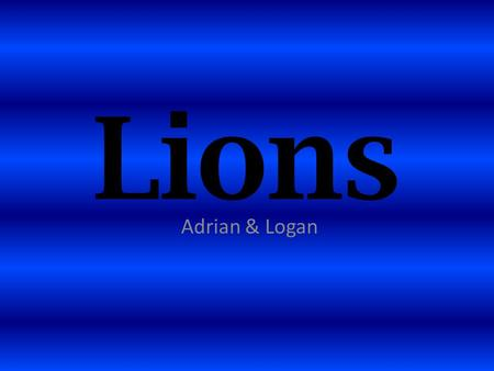Lions Adrian & Logan. What They Look Like They are big cats. Lions are 8 feet long. They have big heads. Lions have big sharp teeth. The males have hair.