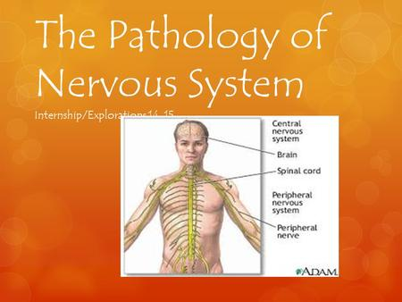 The Pathology of Nervous System Internship/Explorations 14-15.
