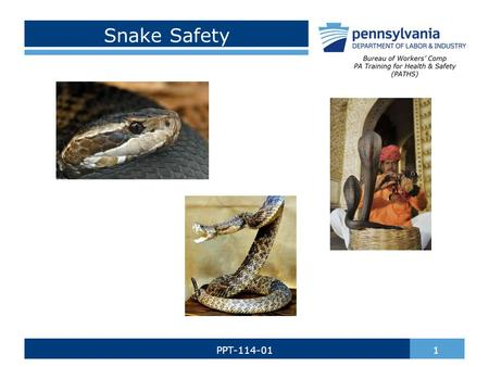 Snake Safety 1PPT-114-01. There are over 3,000 species of snakes. Every year there are nearly 7,000 snake bites. Snake's scales are made up of Keratin,
