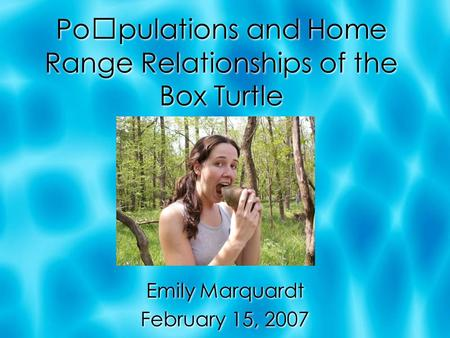 Populations and Home Range Relationships of the Box Turtle Emily Marquardt February 15, 2007 Emily Marquardt February 15, 2007.