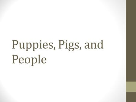 Puppies, Pigs, and People