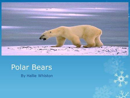 Polar Bears By Hallie Whiston. Basic Facts +  Polar bears are mammals  They live for 25 years  A polar bear is 10 feet and 3 meters long  They have.