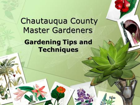 Chautauqua County Master Gardeners Gardening Tips and Techniques.