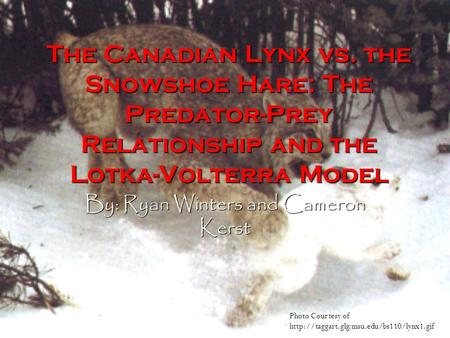 The Canadian Lynx vs. the Snowshoe Hare: The Predator-Prey Relationship and the Lotka-Volterra Model By: Ryan Winters and Cameron Kerst Photo Courtesy.