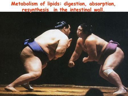 Metabolism of lipids: digestion, absorption, resynthesis in the intestinal wall.