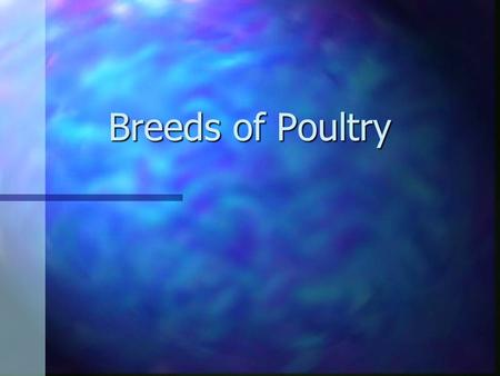 Breeds of Poultry. Plymouth Rock n Plymouth Rocks are a good general farm chicken. n They are docile; normally will show broodiness; possess a long, broad.