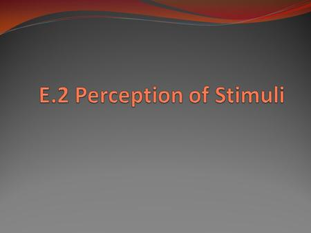 E.2 Perception of Stimuli