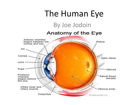 By Joe Jodoin The Human Eye. Parts of the eye There are lots of parts of the eye so EYE will only talk about the main parts. Those parts are the cornea,