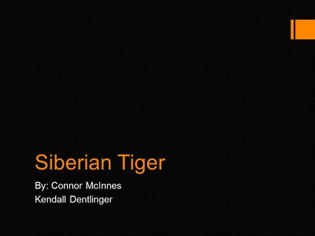 Siberian Tiger By: Connor McInnes Kendall Dentlinger.