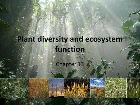 Plant diversity and ecosystem function Chapter 13.