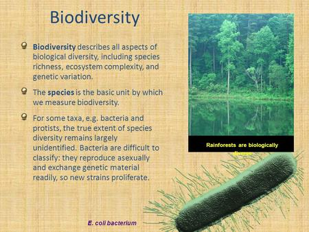 Rainforests are biologically diverse