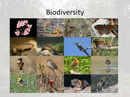 Biodiversity. Are communities saturated? A closed system must balance the gains in energy from net production with those taken by consumers and decomposers.