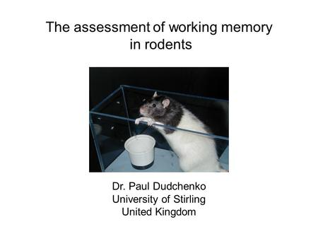 The assessment of working memory in rodents Dr. Paul Dudchenko University of Stirling United Kingdom.