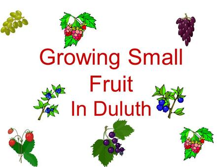 Growing Small Fruit In Duluth.