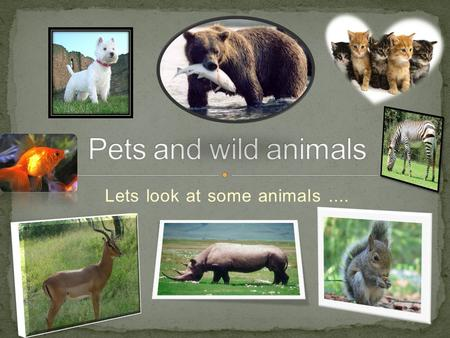 Lets look at some animals ....