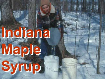 Indiana Maple Syrup Indiana Maple Syrup. Indiana Maple Syrup 2003 Season 200 Producers Estimated production was 5000 gallons Value of crop is estimated.