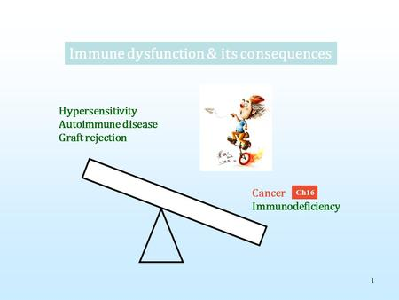 1 Immune dysfunction & its consequences Hypersensitivity Autoimmune disease Graft rejection Cancer Immunodeficiency Ch16.