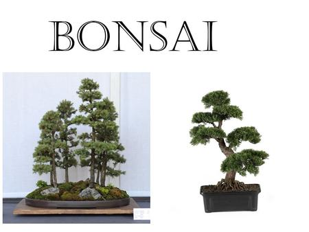 BONSAI. If you shut your eyes and imagine what you can hold in your hands there would be thousands of things….……..but what about a tree ?. Therefore,