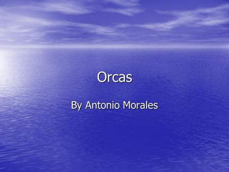 Orcas By Antonio Morales. I have been studying about the orca. I have been studying the orcas physical description, habitat, defense, prey, and finally.