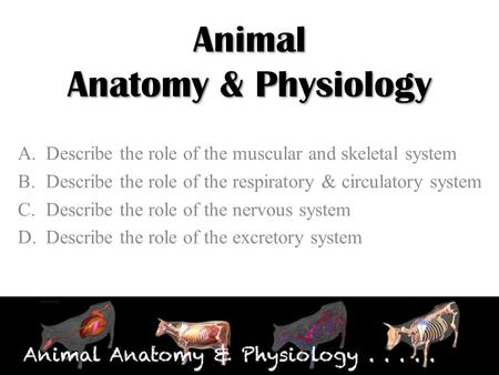 Animal Anatomy & Physiology A.Describe the role of the muscular and skeletal system B.Describe the role of the respiratory & circulatory system C.Describe.