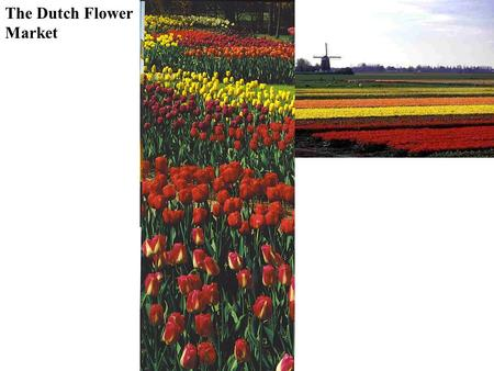 The Dutch Flower Market. Plantation Agriculture Governments in core countries set quotas for imports & subsidize domestic production Large scale cash.