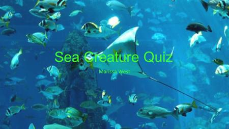 Sea Creature Quiz Marissa West. Table Of Contents What Type of Sting Ray Can Breach (jump out of) the Ocean? Which Animal is Most Closely Related to the.