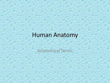 Human Anatomy Anatomical Terms. Definitions Anatomy – Deals with the structure of body parts – their forms and relationships. Physiology – Deals with.