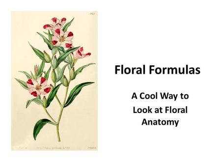 Floral Formulas A Cool Way to Look at Floral Anatomy.