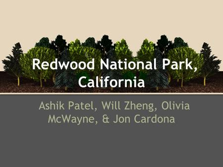 Redwood National Park, California Ashik Patel, Will Zheng, Olivia McWayne, & Jon Cardona.