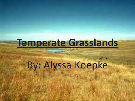 Temperate Grasslands By: Alyssa Koepke. Temperate Grasslands Temperate Grasslands: large, rolling terrains of grasses, flowers, and herbs.