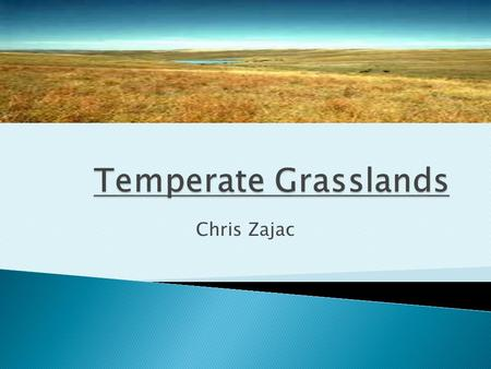 Chris Zajac.  North America- prairies of the Great Plains ◦ Extend from southern Canada to Gulf of Mexico  Eurasia  South America  Africa.
