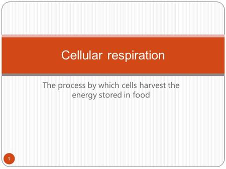 The process by which cells harvest the energy stored in food Cellular respiration 1.