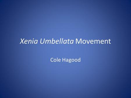 Xenia Umbellata Movement Cole Hagood. Focus and Background Xenia Umbellata Soft coral Pulsing Movement and division