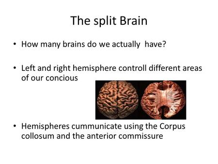 The split Brain How many brains do we actually have? Left and right hemisphere controll different areas of our concious Hemispheres cummunicate using the.