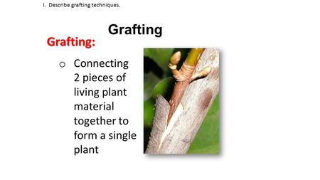 Grafting I. Describe grafting techniques.Grafting: o Connecting 2 pieces of living plant material together to form a single plant.