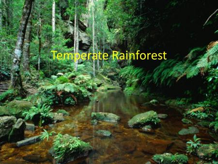 Temperate Rainforest. Locations of Temperate Rainforest Temperate Rainforest can be located in the North America, Chile, and parts of Australia.