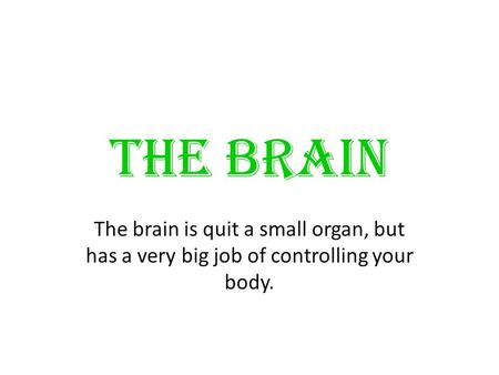 THE BRAIN The brain is quit a small organ, but has a very big job of controlling your body.