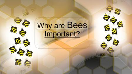 Why are Bees Important?.  What's been changing outside?  Warm weather  Flowers blooming  More bugs  Allergies? It's Spring !