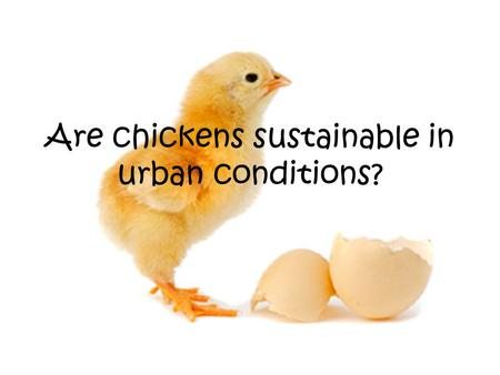 Are chickens sustainable in urban conditions?. Contents Slide 1 Title Slide 2 Contents Slide 3 Key Questions Slide 4-6 What do chickens eat? Slide 7 Who.
