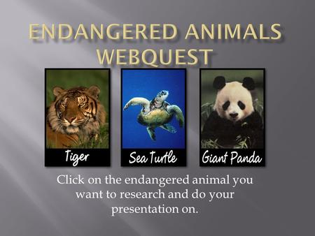 Click on the endangered animal you want to research and do your presentation on.