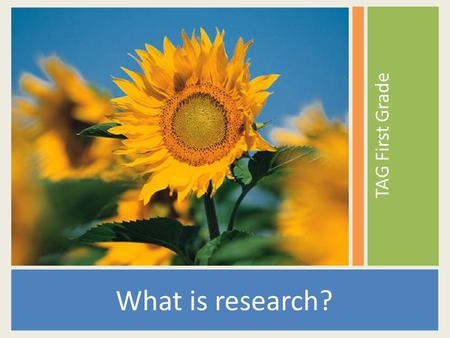 TAG First Grade What is research?. Research is an organized way of finding answers to questions.