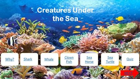 Creatures Under the Sea Why? NEXT Shark Whale Clown Fish Sea Horse Sea Turtle Quiz.