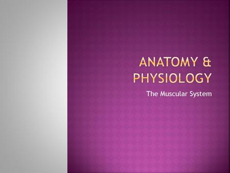 Anatomy & Physiology The Muscular System.