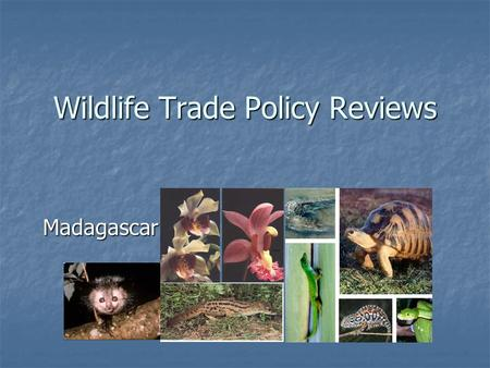 Wildlife Trade Policy Reviews Madagascar. Introduction Madagascar ratified the convention in 1975 Madagascar ratified the convention in 1975 Rich in biodiversity.